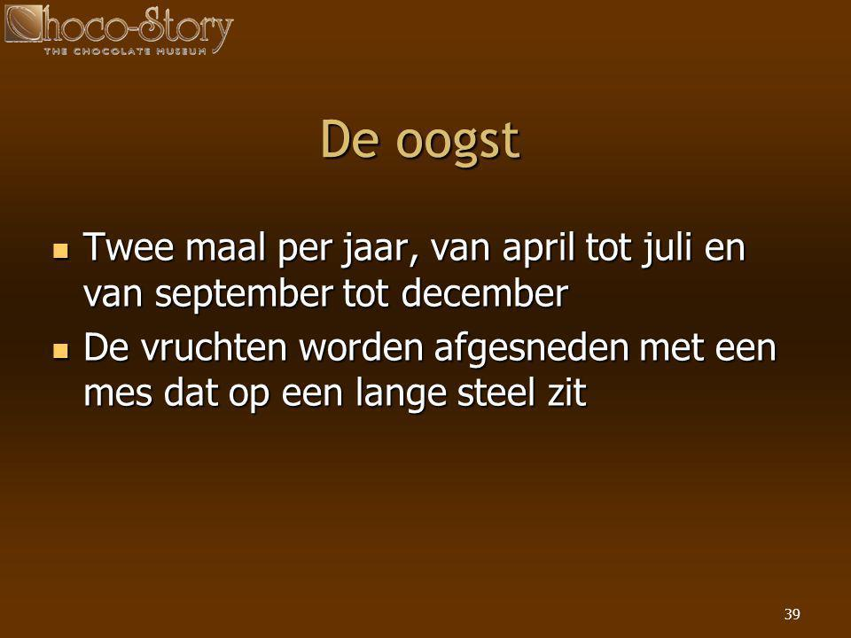 De oogst Twee maal per jaar, van april tot juli en van september tot december.