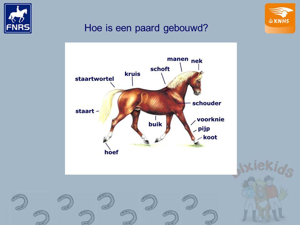 Hoe is een paard gebouwd