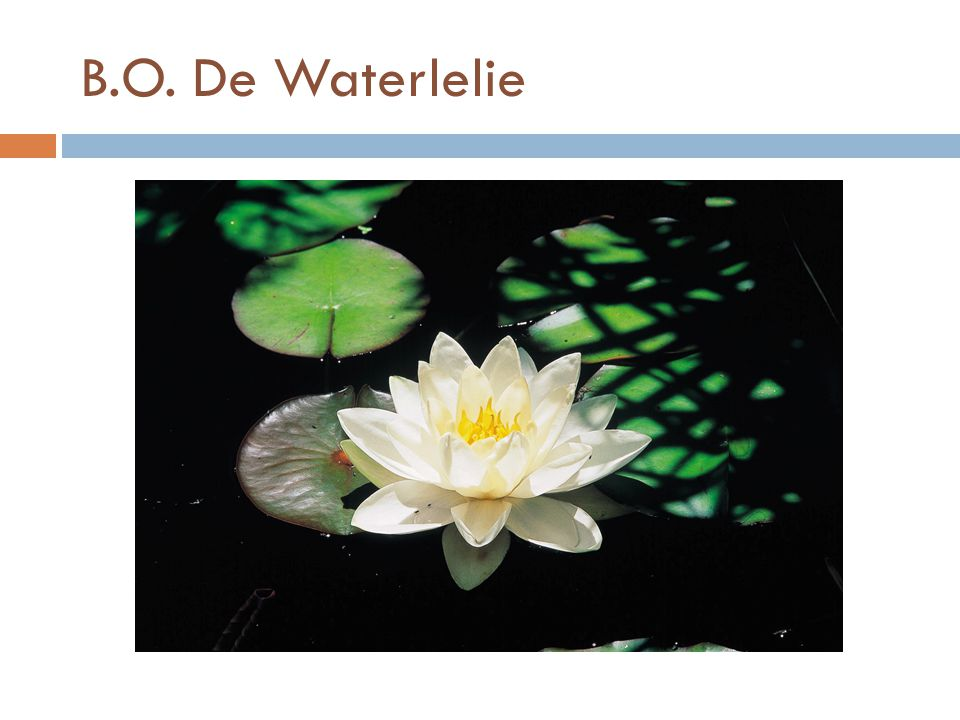 B.O. De Waterlelie