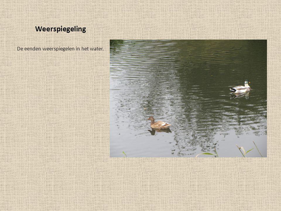 Weerspiegeling De eenden weerspiegelen in het water.