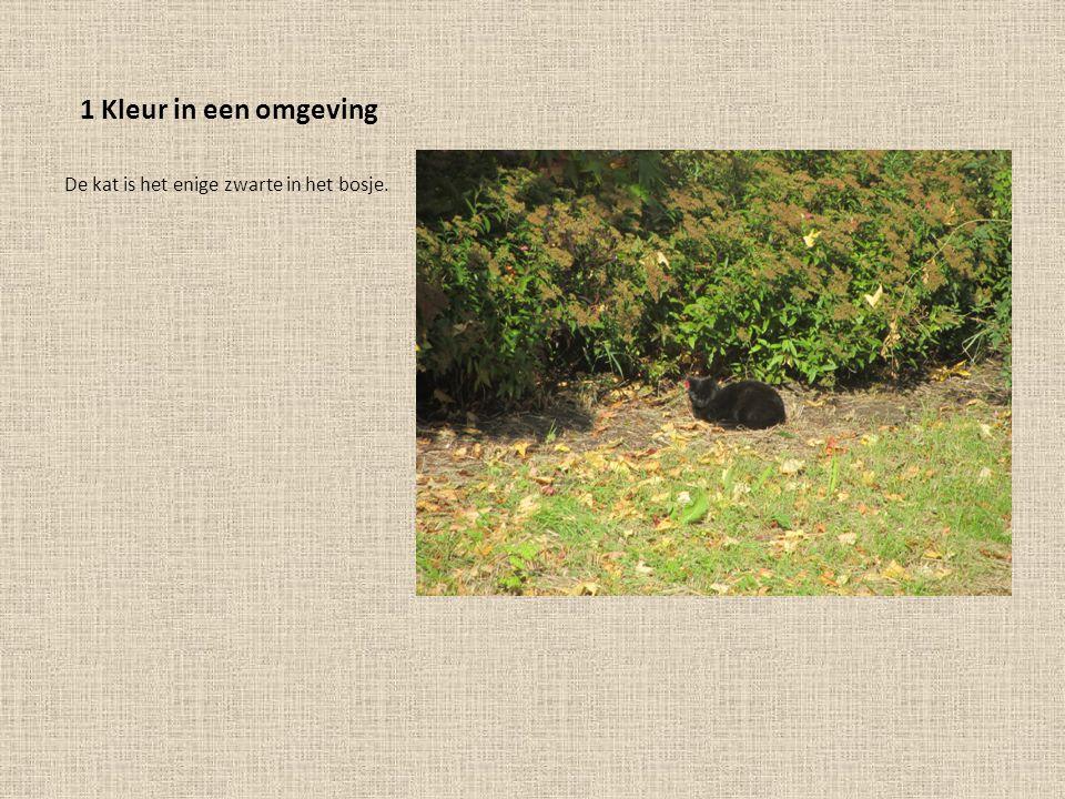 1 Kleur in een omgeving De kat is het enige zwarte in het bosje.