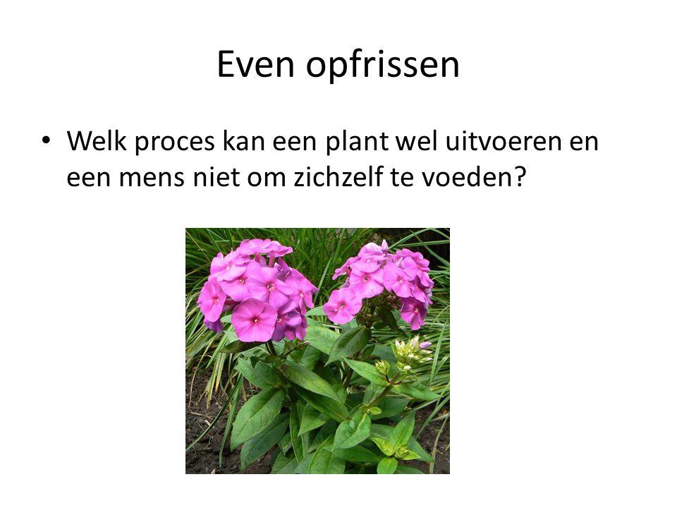 Even opfrissen Welk proces kan een plant wel uitvoeren en een mens niet om zichzelf te voeden