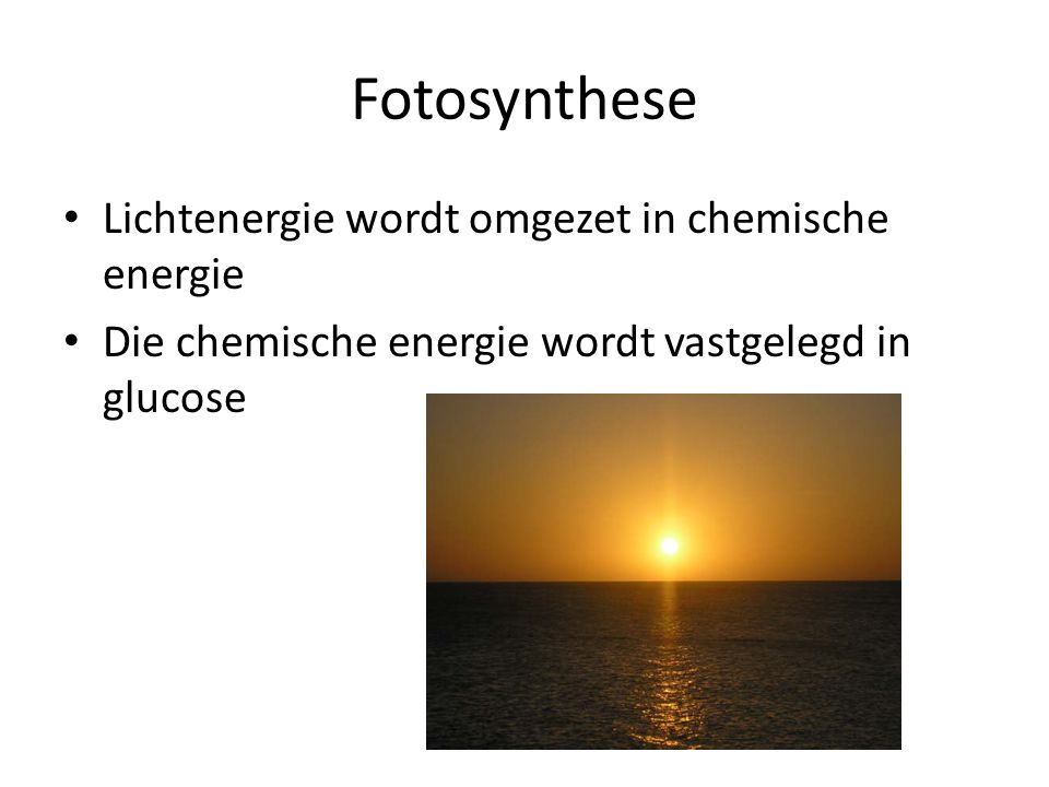 Fotosynthese Lichtenergie wordt omgezet in chemische energie