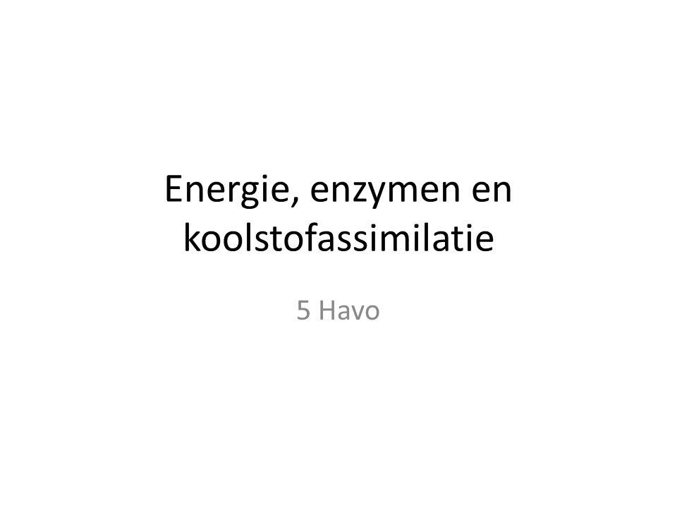 Energie, enzymen en koolstofassimilatie