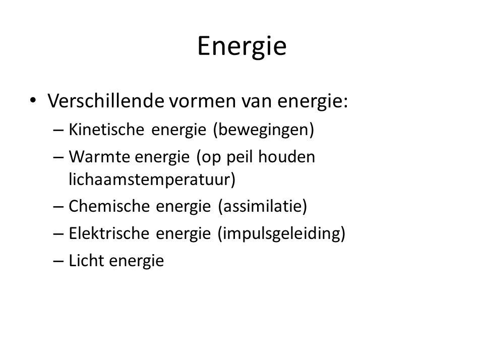 Energie Verschillende vormen van energie: