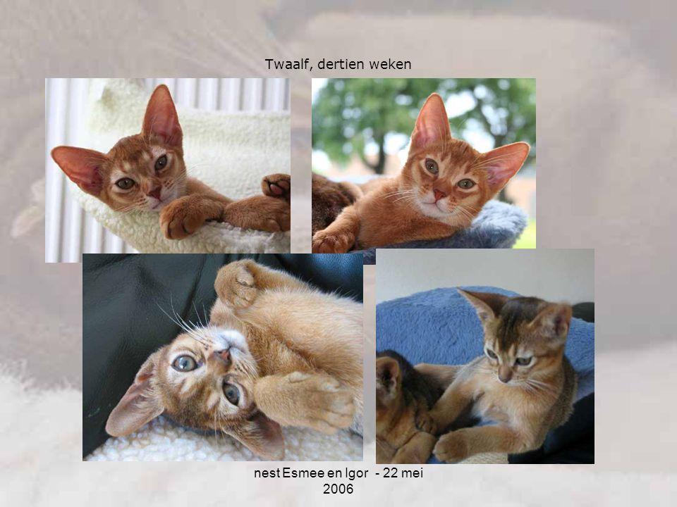 Twaalf, dertien weken nest Esmee en Igor - 22 mei 2006 4-4-2017