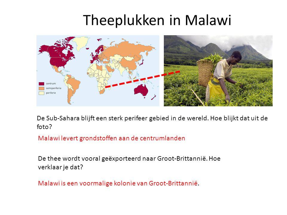 Theeplukken in Malawi De Sub-Sahara blijft een sterk perifeer gebied in de wereld. Hoe blijkt dat uit de foto