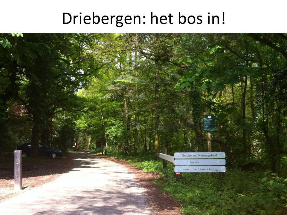 Driebergen: het bos in!