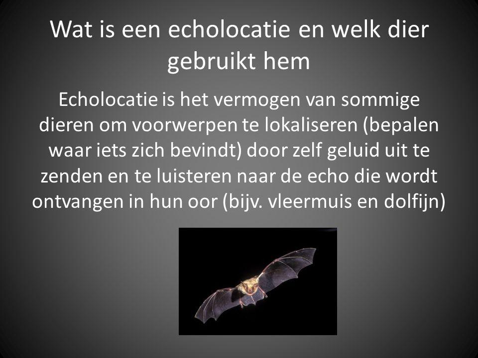 Wat is een echolocatie en welk dier gebruikt hem