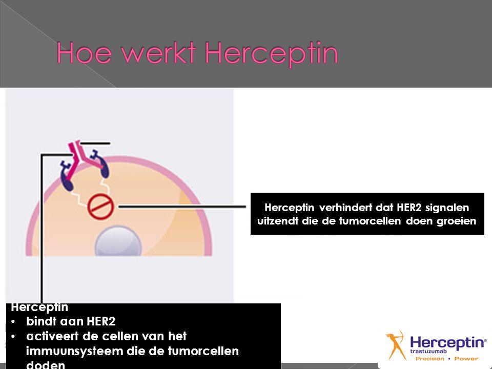 Hoe werkt Herceptin Herceptin bindt aan HER2
