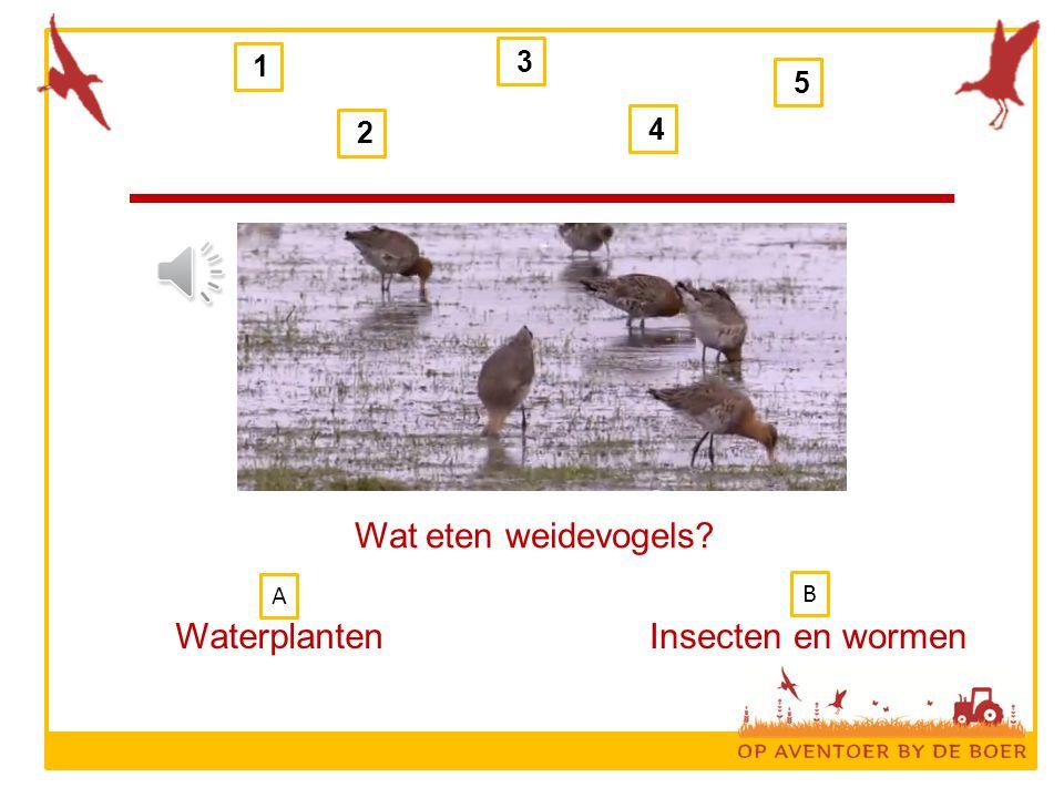 1 3 5 2 4 Wat eten weidevogels A B Waterplanten Insecten en wormen