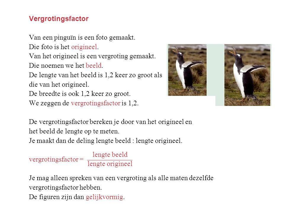 Vergrotingsfactor Van een pinguïn is een foto gemaakt. Die foto is het origineel. Van het origineel is een vergroting gemaakt.