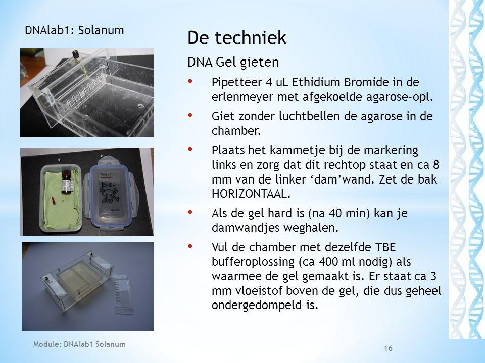 De techniek DNA Gel gieten DNAlab1: Solanum