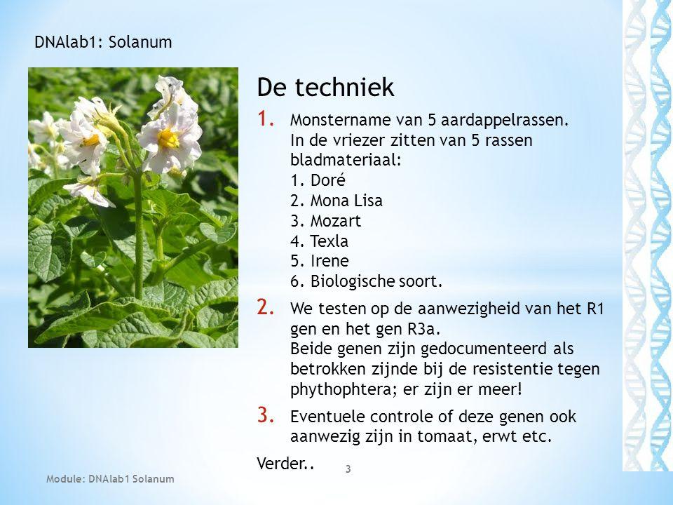 De techniek DNAlab1: Solanum