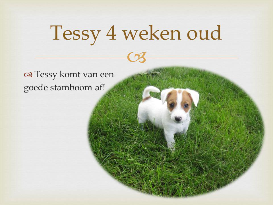 Tessy 4 weken oud Tessy komt van een goede stamboom af!