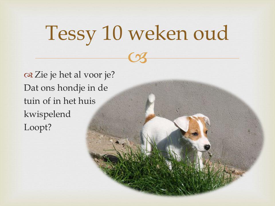 Tessy 10 weken oud Zie je het al voor je Dat ons hondje in de
