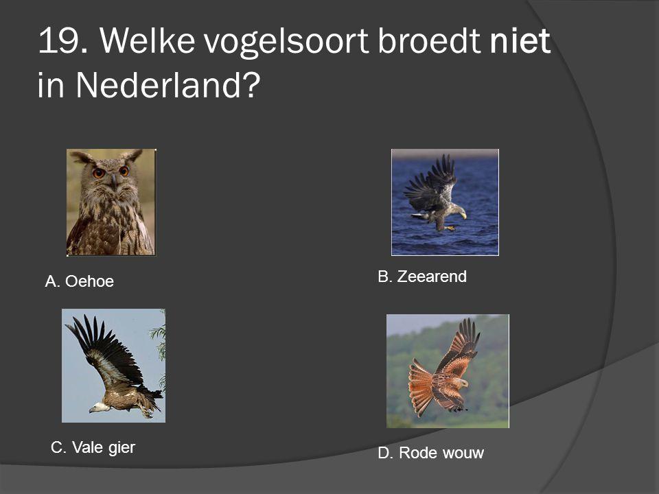 19. Welke vogelsoort broedt niet in Nederland