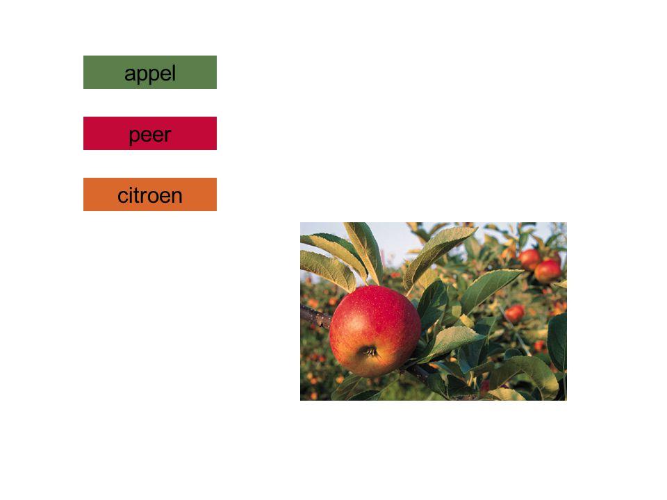 appel peer citroen