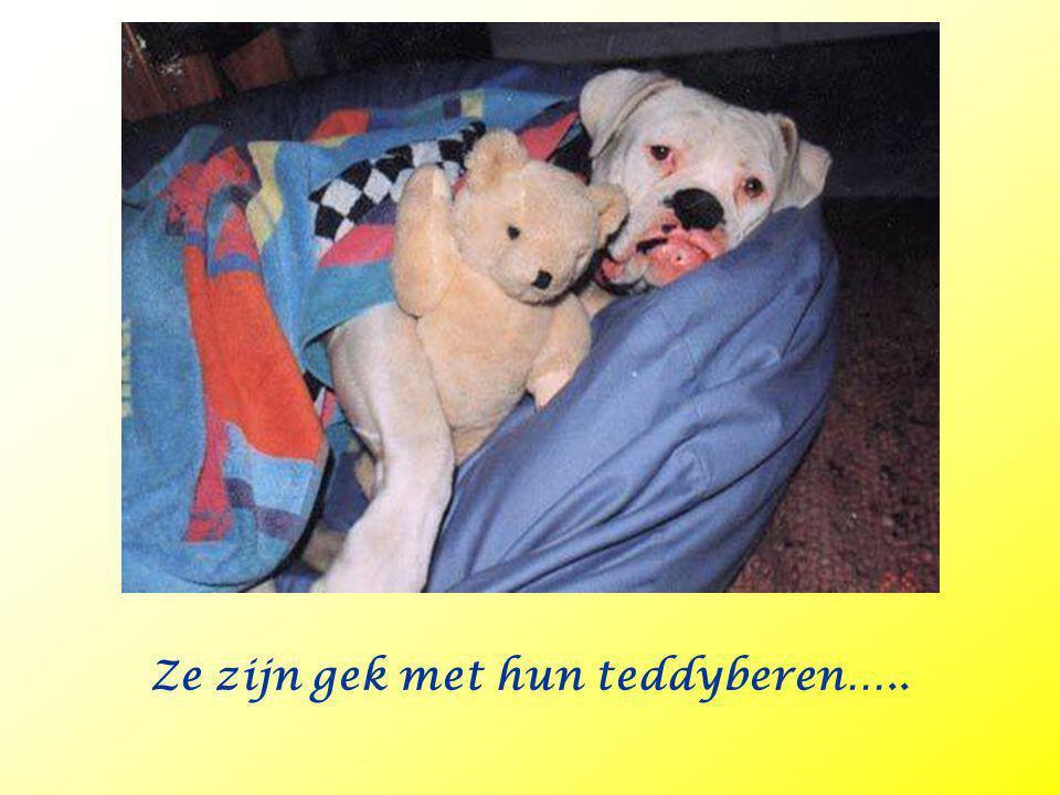 Ze zijn gek met hun teddyberen…..
