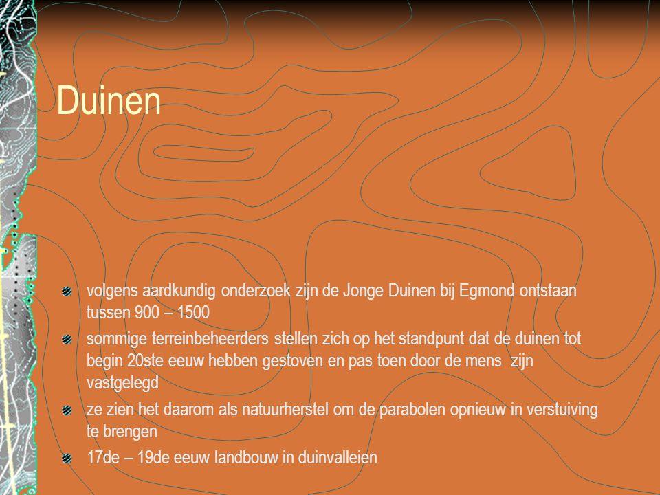Duinen volgens aardkundig onderzoek zijn de Jonge Duinen bij Egmond ontstaan tussen 900 – 1500.