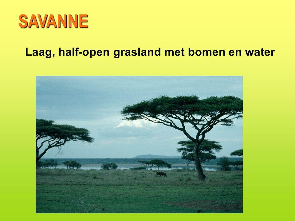 SAVANNE Laag, half-open grasland met bomen en water