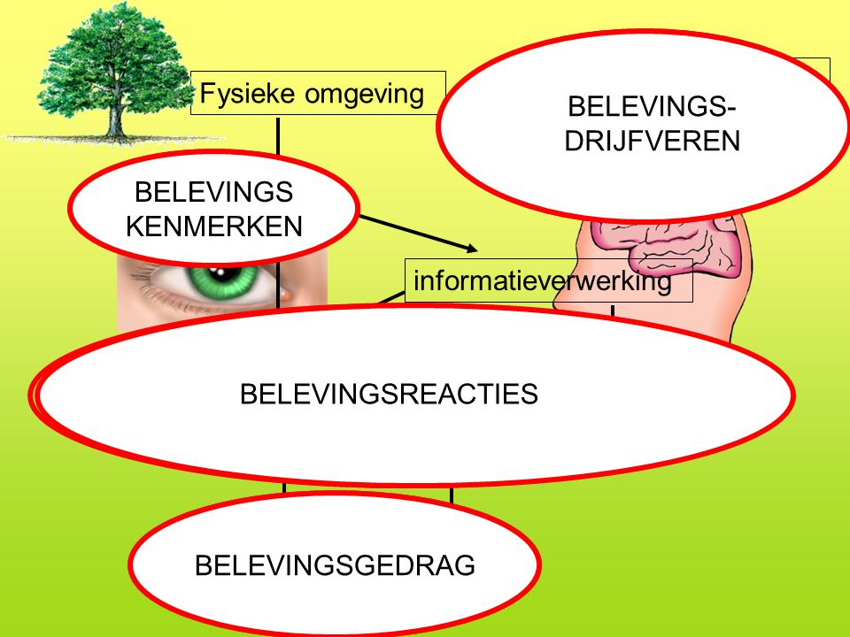 BELEVINGS-DRIJFVEREN