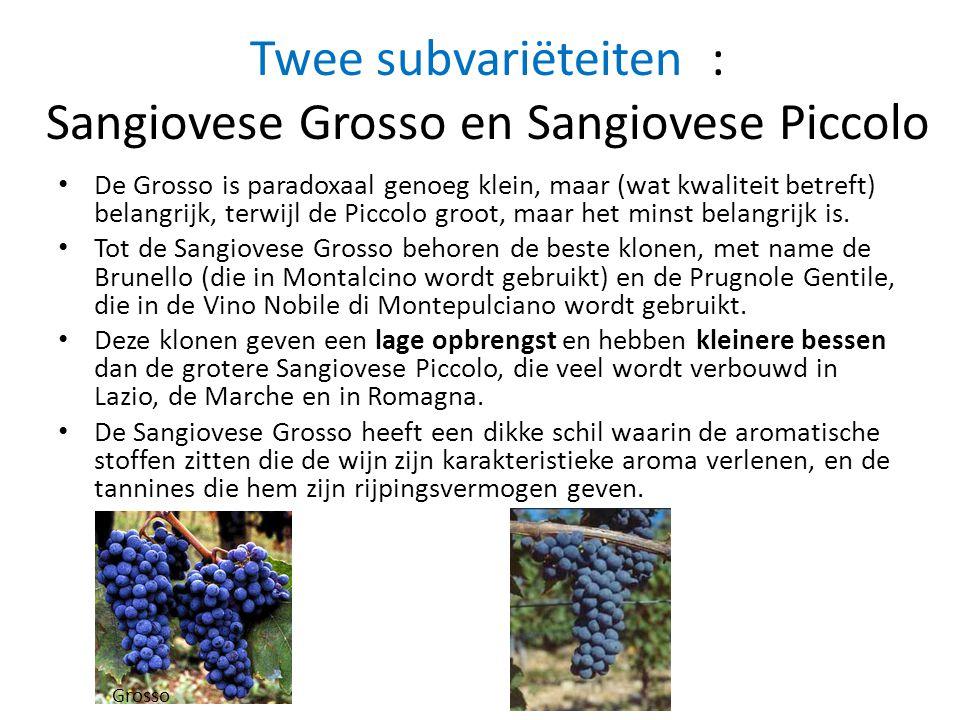 Twee subvariëteiten : Sangiovese Grosso en Sangiovese Piccolo