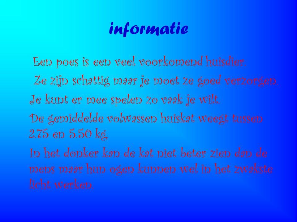 informatie Een poes is een veel voorkomend huisdier.