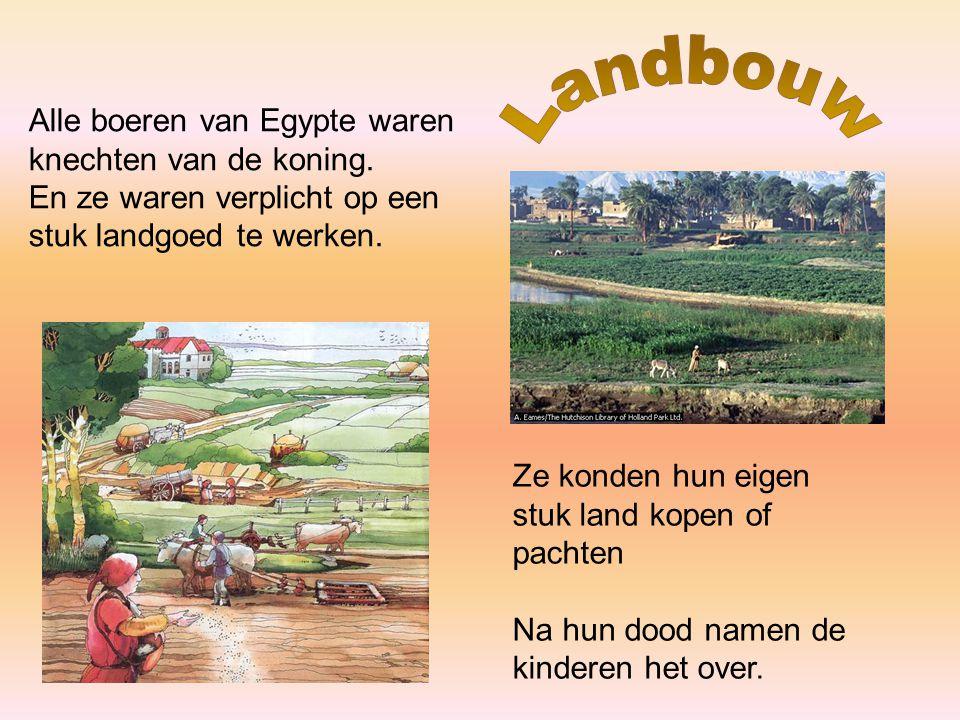 Landbouw Alle boeren van Egypte waren knechten van de koning.