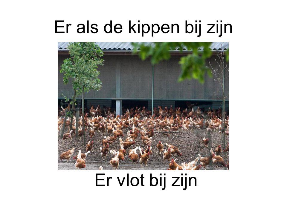 Er als de kippen bij zijn