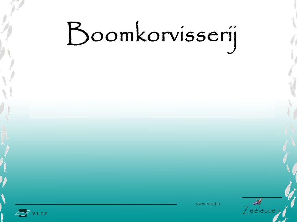 Boomkorvisserij