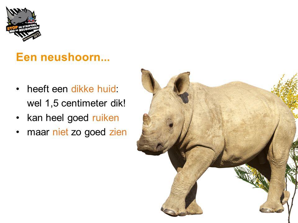 Een neushoorn... heeft een dikke huid: wel 1,5 centimeter dik!