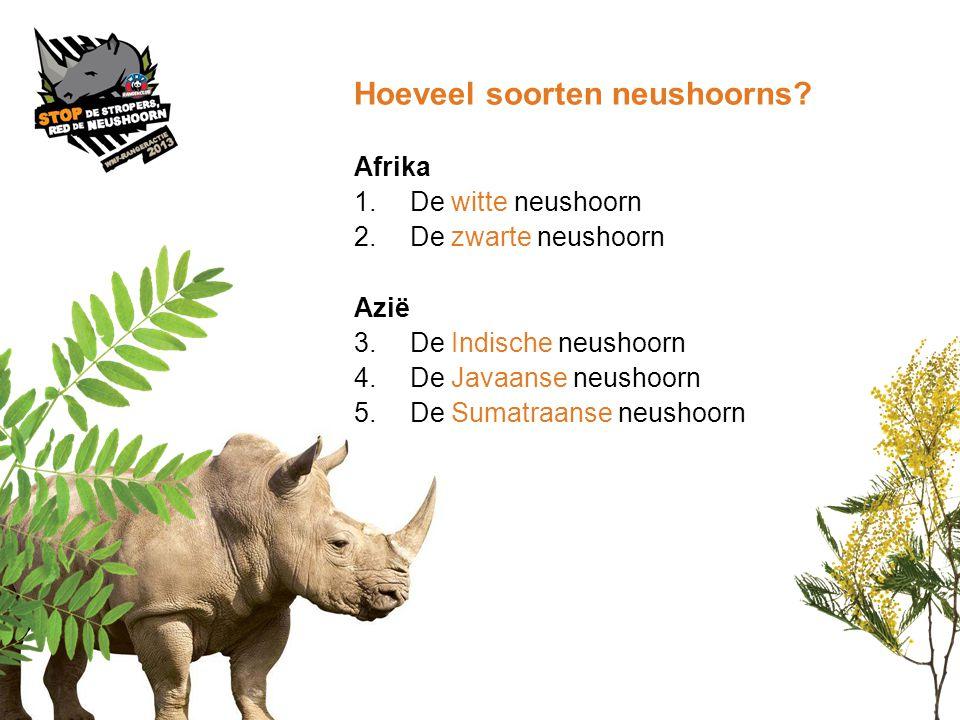 Hoeveel soorten neushoorns