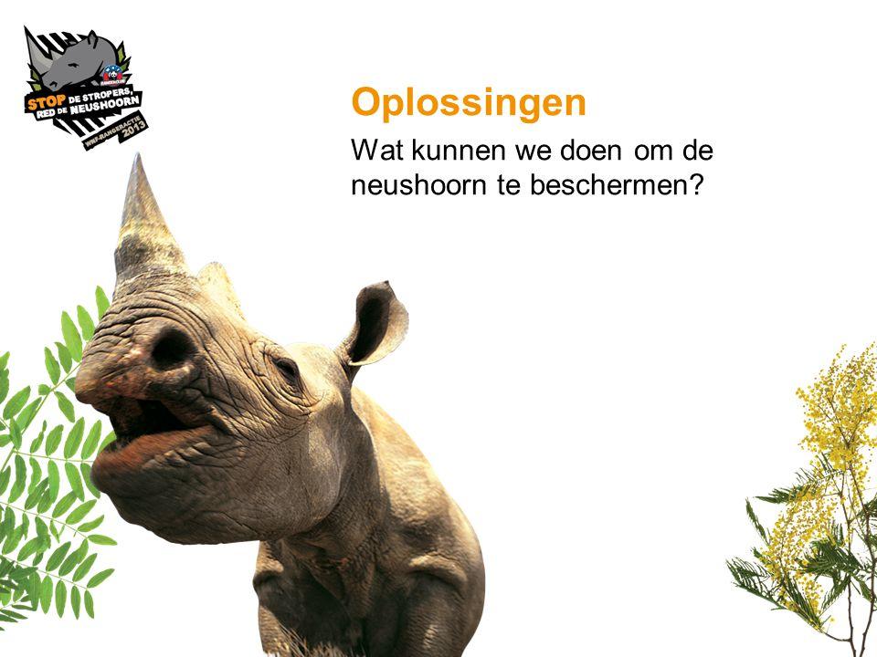 Oplossingen Wat kunnen we doen om de neushoorn te beschermen