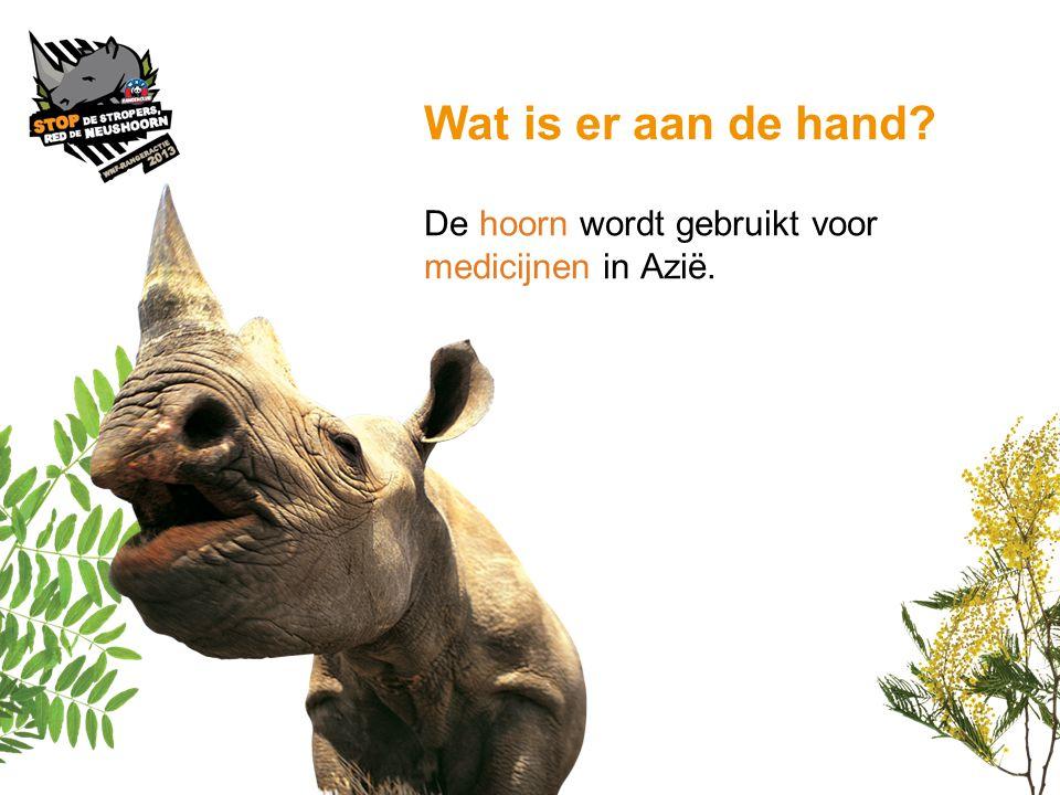 Wat is er aan de hand De hoorn wordt gebruikt voor medicijnen in Azië.