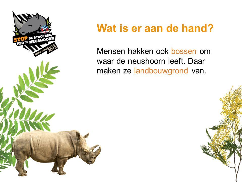 Wat is er aan de hand. Mensen hakken ook bossen om waar de neushoorn leeft.