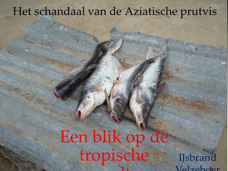 Het schandaal van de Aziatische prutvis