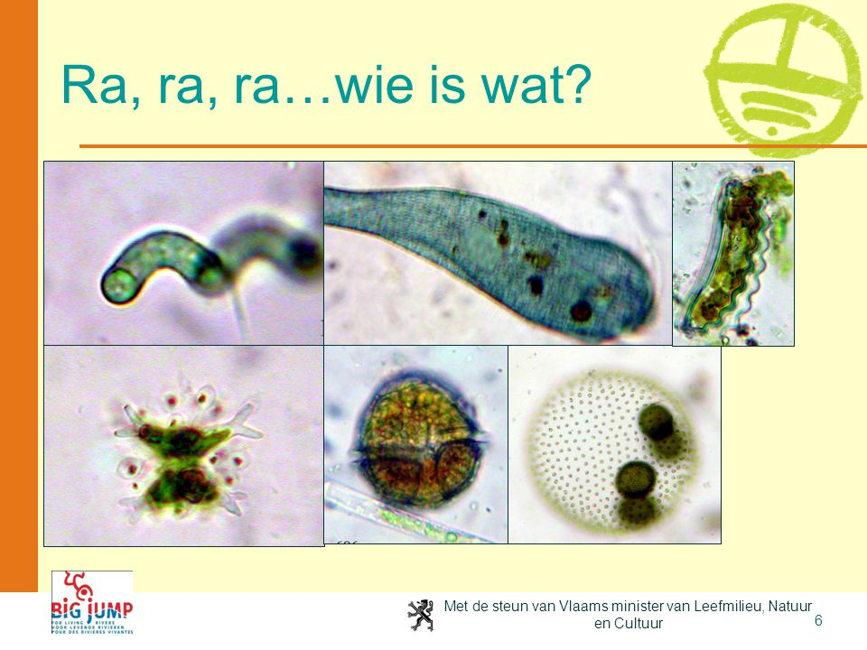 Ra, ra, ra…wie is wat