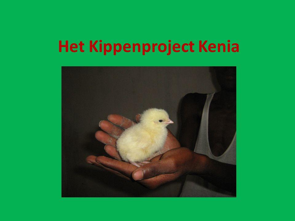 Het Kippenproject Kenia