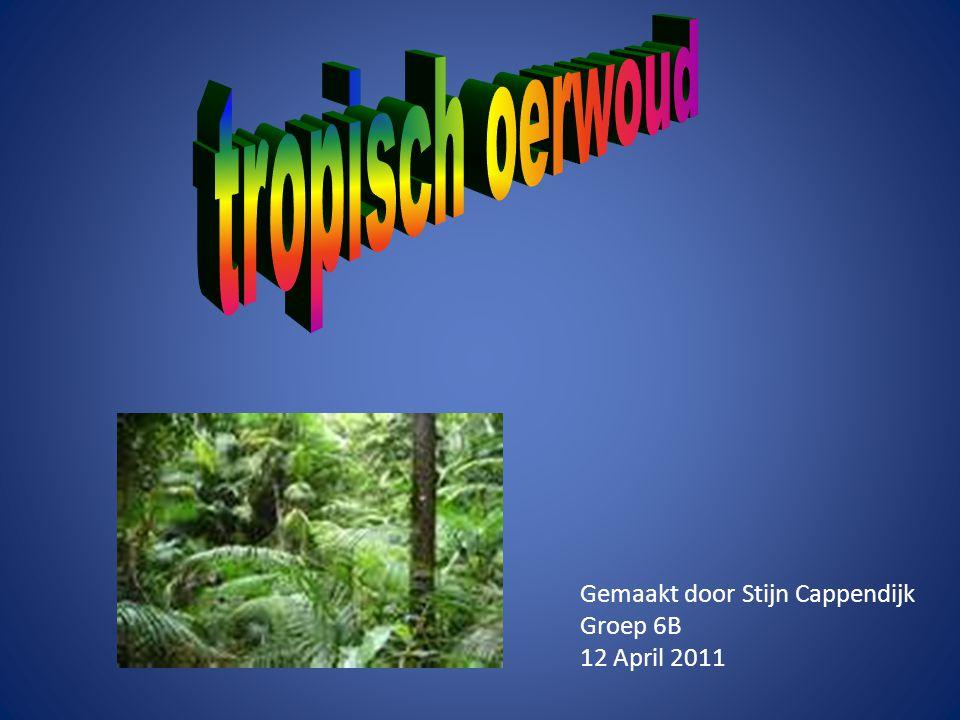tropisch oerwoud Gemaakt door Stijn Cappendijk Groep 6B 12 April 2011