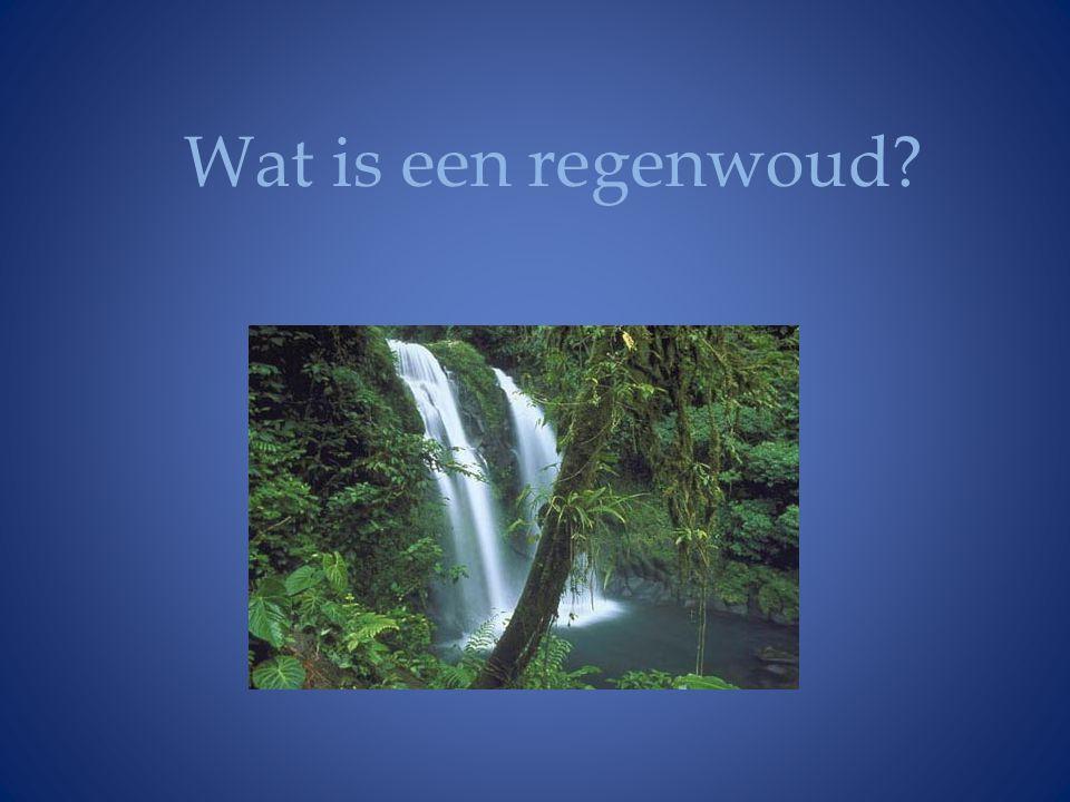 Wat is een regenwoud