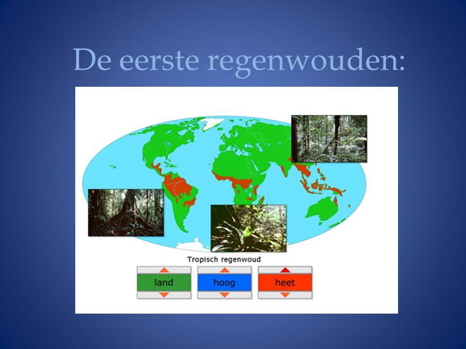 De eerste regenwouden: