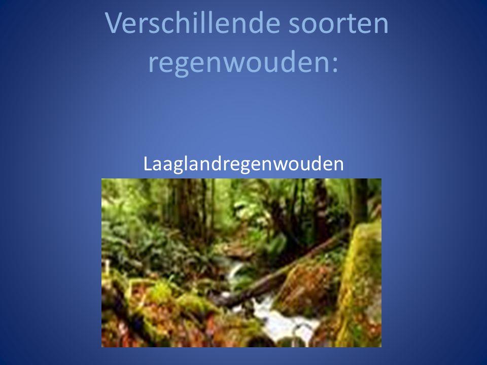 Verschillende soorten regenwouden:
