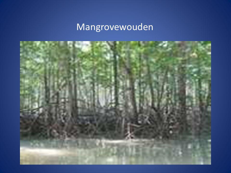Mangrovewouden