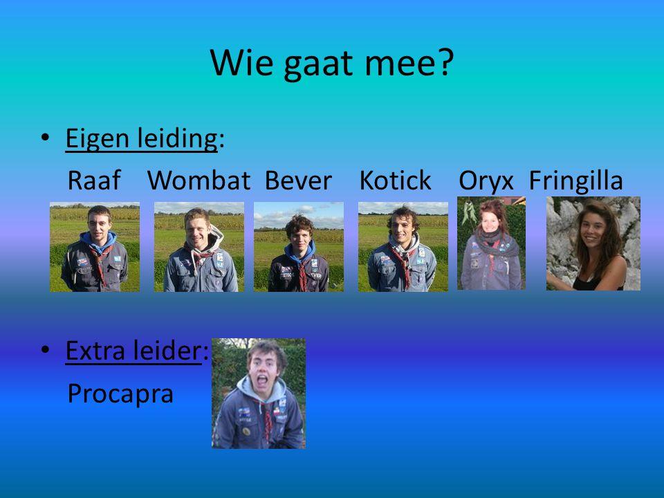 Wie gaat mee Eigen leiding: Raaf Wombat Bever Kotick Oryx Fringilla