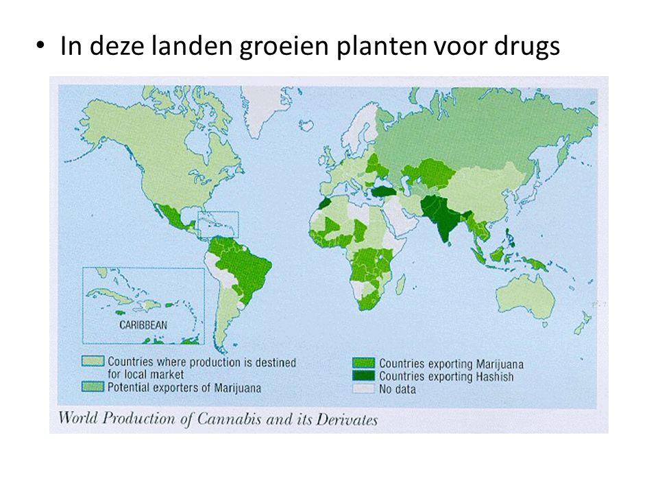 In deze landen groeien planten voor drugs