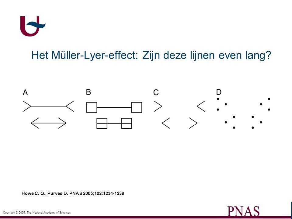Zie Prof. Paul Verluyten (UA)