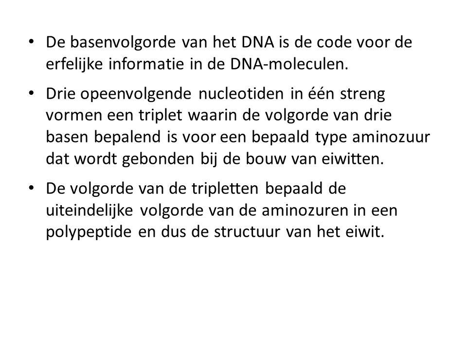 De basenvolgorde van het DNA is de code voor de erfelijke informatie in de DNA-moleculen.