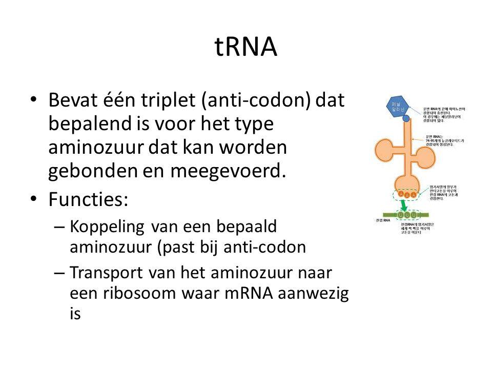 tRNA Bevat één triplet (anti-codon) dat bepalend is voor het type aminozuur dat kan worden gebonden en meegevoerd.