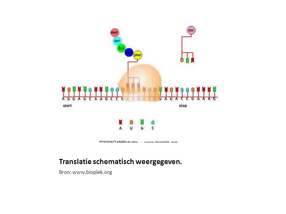 Translatie schematisch weergegeven.